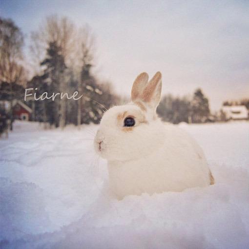 动物好冷的图片可爱